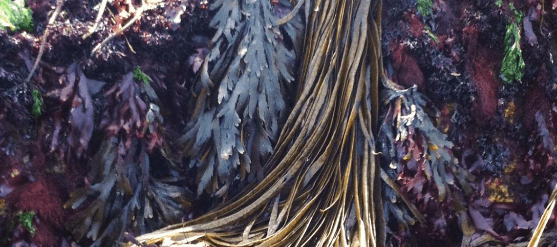 zeewier-image2